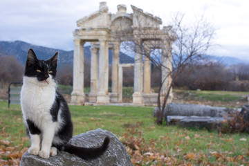 A cat in front of Tetrapylon of Aphrodisias Ancient City, Aydin / Turkey