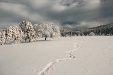 stunning winter dramatic scenery, trees covered frost on background of mountain and forest, spectacular winter scenery, amazing nature image, Carpathian national park, Europe landscape