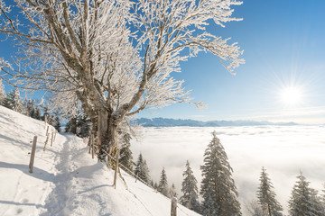 Joyful winter day before the Christmas holiday.  Road to the mountains. Switzerland. Rigi
