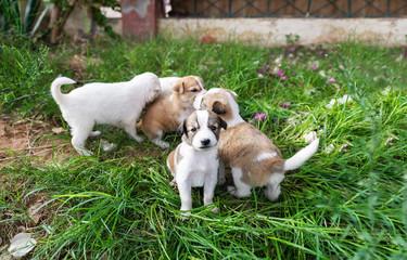 Homeless puppies in a grass. Closeup photo