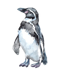 Watercolor clipart with penguin isolated on white background. Hand drawn illustration