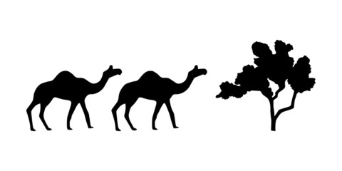 Vector black silhouettes two walking camels and tree isolated on white background.