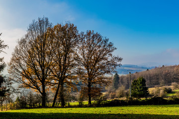 amazing picture of a set of trees on a meadow between the villages of Vielsalm and Beche with a beautiful blue sky on a wonderful and sunny winter day the Belgian Ardennes