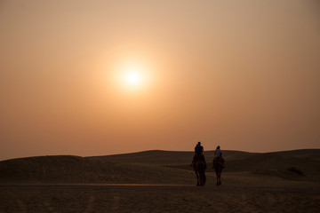 camels with sun