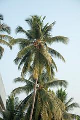 palm on the blue sky