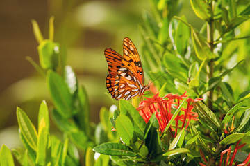 Nature background butterfly.