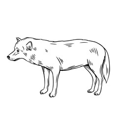 Outline wolf icon