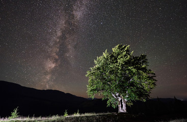 Illuminated lonely high tree under night sky full of stars and Milky way. Carpathians mountains