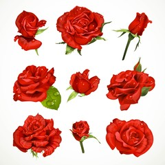 Red roses set isolated on a white background