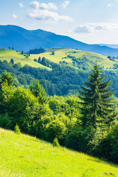rural field on forested rolling hills in summer. wonderful mountainous landscape