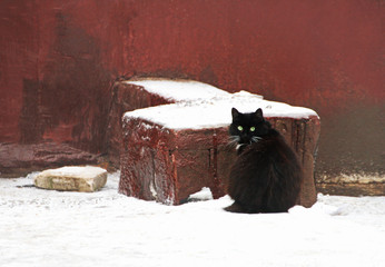 Black fluffy cat sitting on the snow near the wall of the house.
