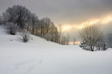 gorgeous winter sunrise in mountains. trees in hoarfrost on a snow covered hill. glowing overcast sky above the distant ridge