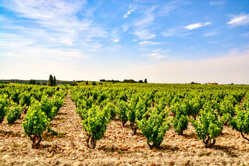 Vineyards of Chateauneuf du Pape Wall mural
