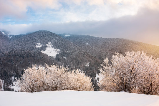 gorgeous winter sunrise in mountains. glowing hoarfrost on trees in morning light. exquisite nature scenery
