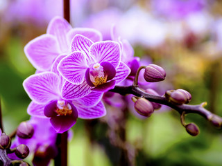 Vivid pink orchids flowers