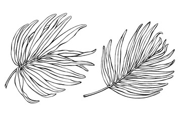 Set of exotic tropical palm leaves. Black and white outline illustration hand drawn work isolated on white background.