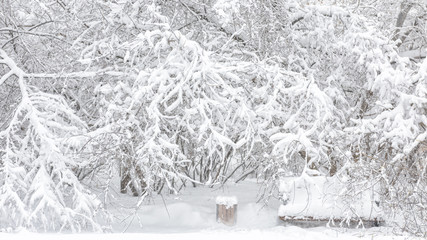Snowy trees in Moscow, Russia