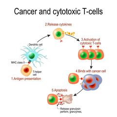 Cancer and cytotoxic T-cells