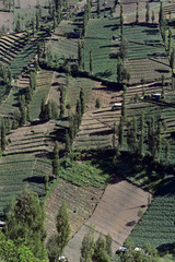 Aerial view of the fields in East Java, near Mount Bromo, Indonesia