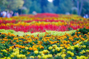 Colorful flowers field in park 1