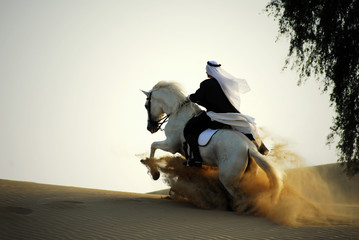 arabian horse and rider