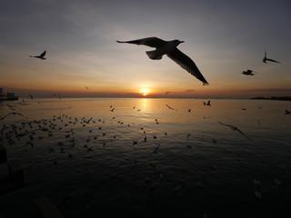 Photo sur Aluminium Dauphins Wonderful picturesque places , many seagulls and good view at Bangpu Recreation Center ,Samut Prakan THAILAND.