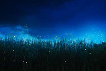 firefly on a grass field at night