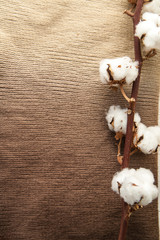 Cotton flowers on brown fabric scarf closeup. Minimal layout. Home-like concept