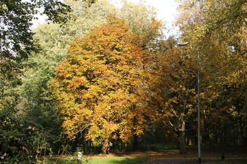 Yellow, orange and brown leaves on trees in the autumn season in public park Schakenbosch in Leidschendam