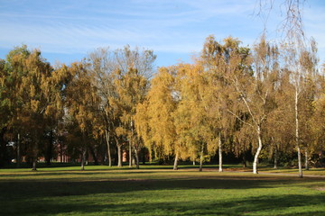 Yellow, orange and brown leaves on trees in the autumn season in public park Schakenbosch in Leidschendam