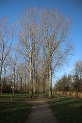 Poplar trees along a pool during autumn in the recreation area named Park Hitland in Nieuwerkerk aan den IJssel in the Netherlands