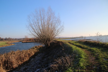 Dike along river Rhine named Nederrijn in autumn sun located at the town of Elst