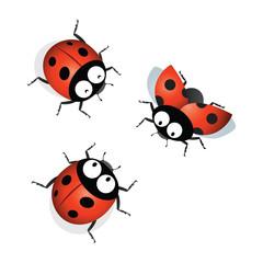 Keuken foto achterwand Lieveheersbeestjes Ladybird. Vector illustration