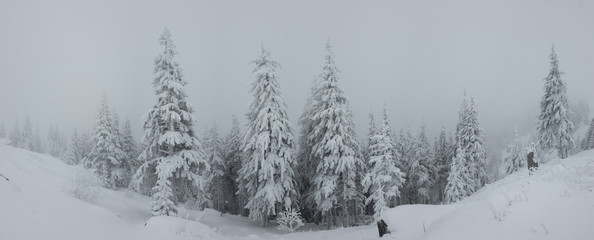 Panorama of heavy snow on top of the mountain. Cold foggy winter day. Trees covered in snow