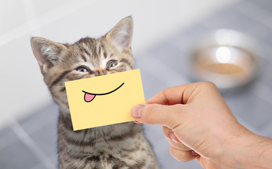 Papier Peint - funny cat with smile and tongue on cardboard sitting near food