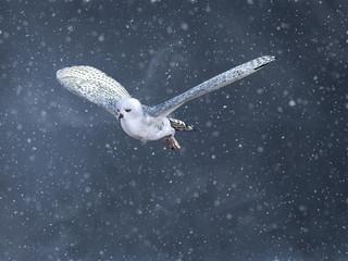 Fototapeta 3D rendering of a flying snow owl in a winter storm. obraz