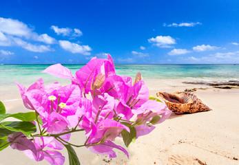 bougainvillées sur plage au coquillage