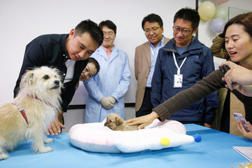 Sinogene CEO Mi Jidong and staff hand over a one-month-old puppy to his owner He Jun in Beijing