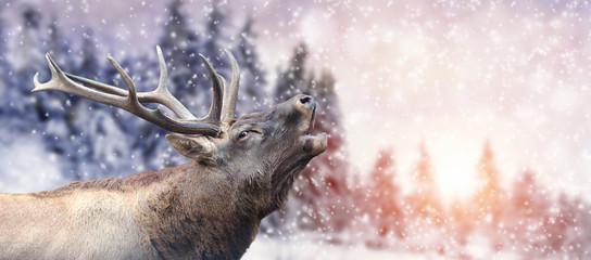 Wall Mural - Deer on winter background