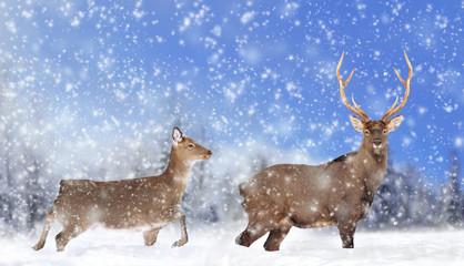 Fototapete - Close young deer in nature