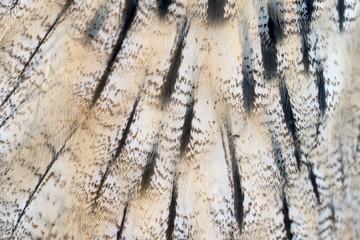 Animal skins texture of owl