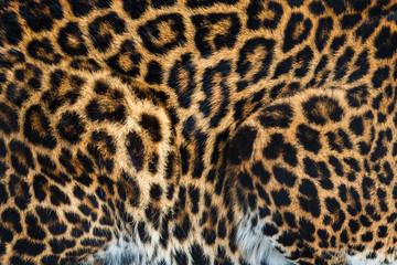Fototapete - Animal skins texture of leopard