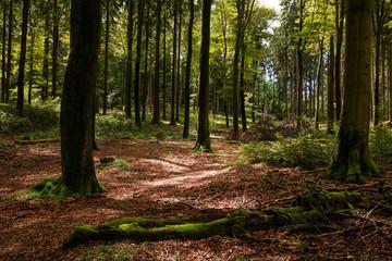 Foreste Westerwald