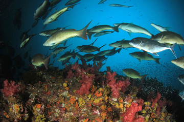 Fish on coral reef