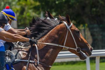 Horses Race Start Gate Closeup Action