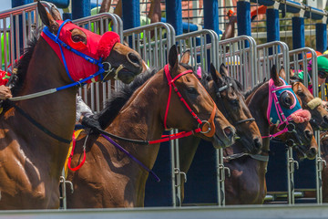 Horses Race Starting Gate Animals Heads Closeup Action