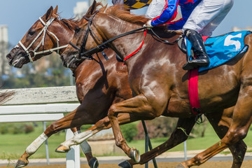 Horses Racing Closeup Animal Running Action on Grass Track