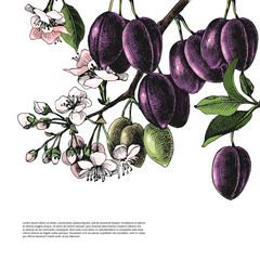 Background with hand drawn plum branches