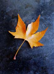 Autumn leaf on black background