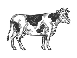 Cow rural farm animal engraving vector illustration. Scratch board style imitation. Black and white hand drawn image.